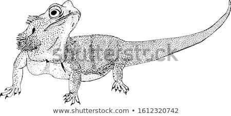 szakállas · sárkány · közelkép · fej · lövés · gyík - stock fotó © ziprashantzi
