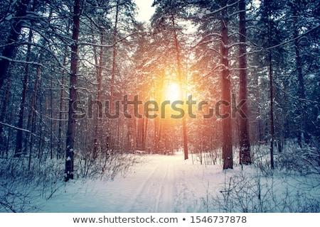 冬 · 森林 · 風景 · 写真 · 木材 · 自然 - ストックフォト © eltoro69
