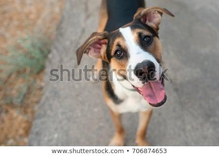 Hond straat vrouwelijke naar gebouw stad Stockfoto © fxegs