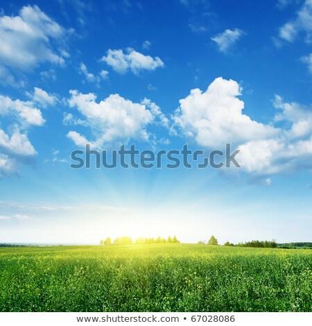области Blue Sky цветения цветы фон зеленый Сток-фото © tainasohlman