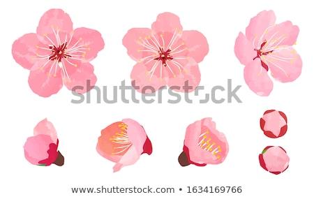 ダブル · 桜 · ツリー · 白 · 空 - ストックフォト © ifeelstock