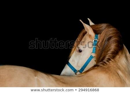 Atrás tiro caballo Foto stock © art9858