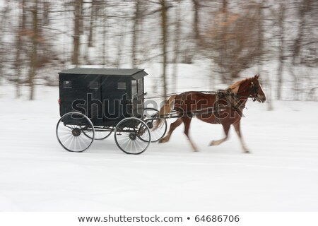 amish horse and carriage on snowy road stock photo © mpetersheim