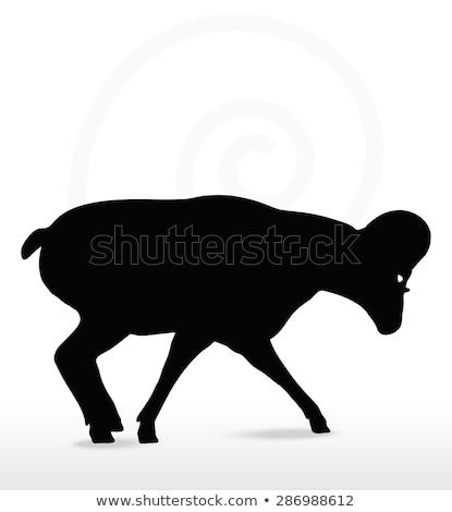 ビッグ · ホーン · 羊 · シルエット · 徒歩 · ポーズ - ストックフォト © istanbul2009