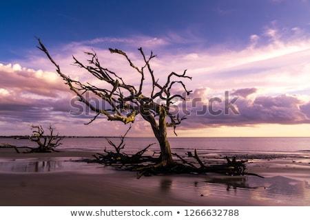 Foto stock: Cênico · morto · madeira · raiz · secar · paisagem