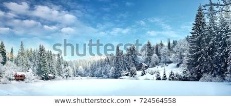 scenic winter panorama with trees Stock photo © meinzahn