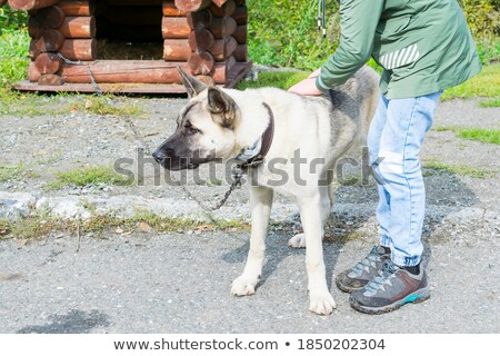 A boy in the doghouse Stock photo © bluering