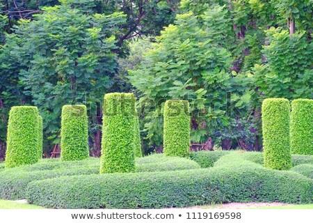 jardim · labirinto · maravilhoso · flor · natureza - foto stock © luissantos84