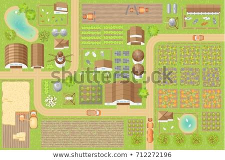 Fazenda ver topo legumes paisagem fundo Foto stock © bluering