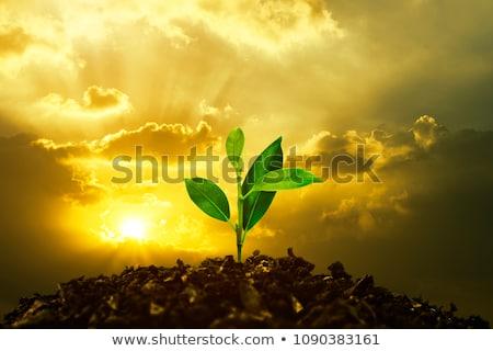 Stockfoto: Groeiend · handen · hyacint · abstract · groene · Blauw