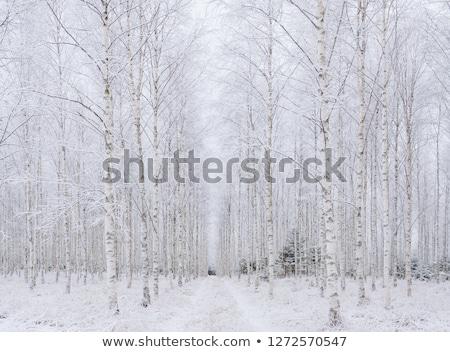 sonbahar · yaprakları · kapalı · don · sonbahar · huş · ağacı · yaprakları - stok fotoğraf © juhku