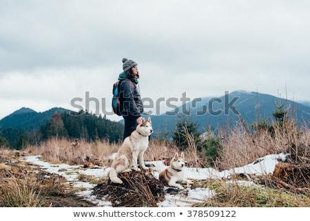 Huskies trekking in the snow Stock photo © IS2