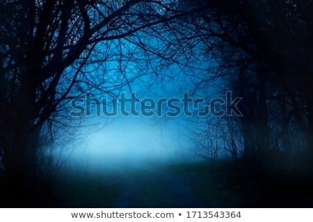 Mystère forêt sombre nuit illustration ciel Photo stock © bluering