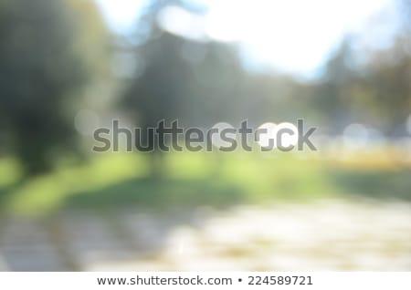 bulanık · yeşil · yeşillik · güneş · ışığı · doğal · sarı - stok fotoğraf © artjazz