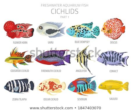 коралловый · риф · рыбы · коллекция · природы · океана · животные - Сток-фото © robuart