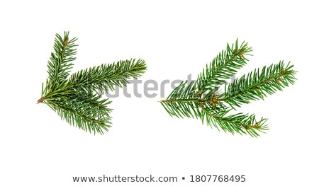 Isolated Firtree Frame Isolated Background Stock photo © cammep