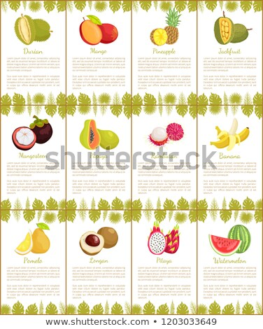 Papaya and Longan Posters Set Vector Illustration Stock photo © robuart