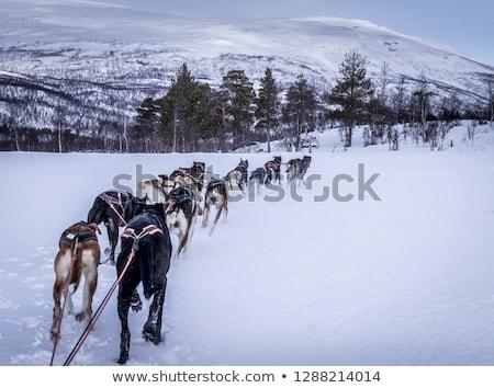 Bonitinho família trenó paisagem mulher Foto stock © Lopolo