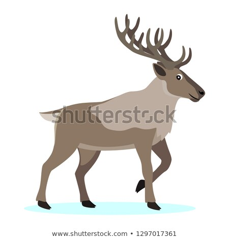 Cute forest polar animal, cartoon caribou reindeer with long horns Stock photo © MarySan