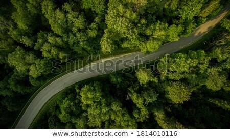 Road through the forest Stock photo © karandaev