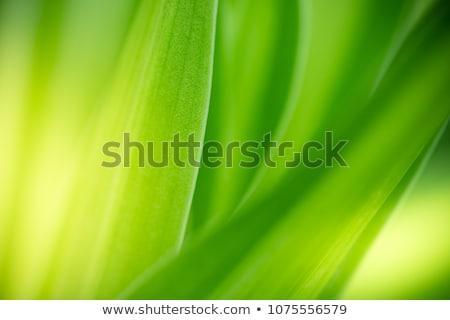 新鮮な · 緑の草 · 春 · シーズン · 画像 · 浅い - ストックフォト © artjazz