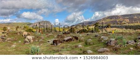 Manzara balya dağ etiyopyalı dağlar park Stok fotoğraf © artush