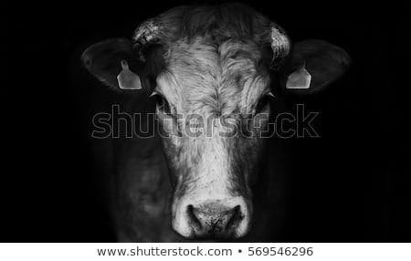 happy black and white cow farm animal Stock photo © izakowski