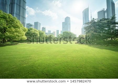 Sunny day in summer city park Stock photo © dariazu