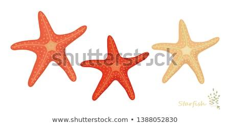 Desenho animado laranja starfish isolado branco praia Foto stock © cidepix