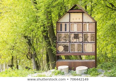 Zöld darázs természet kert méh fehér Stock fotó © sweetcrisis