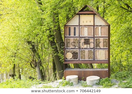 Groene wesp natuur tuin bee witte Stockfoto © sweetcrisis