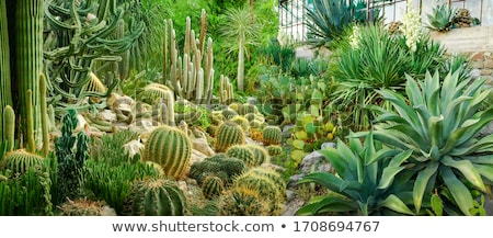 Gardening of stony desert Stock photo © pzaxe