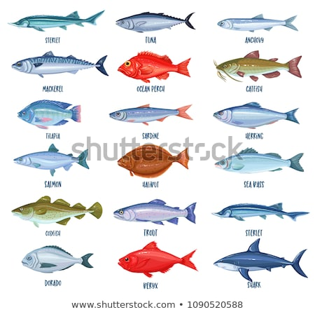 The set of the sea and river fishes stock photo © perysty