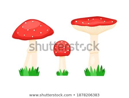 Toxique champignons nature forêt rouge magie Photo stock © fanfo