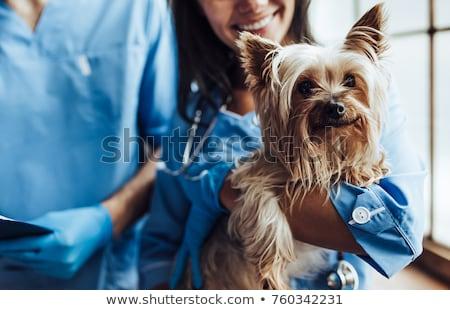 cachorro · exame · jovem · veterinário · médico · feliz - foto stock © markhayes