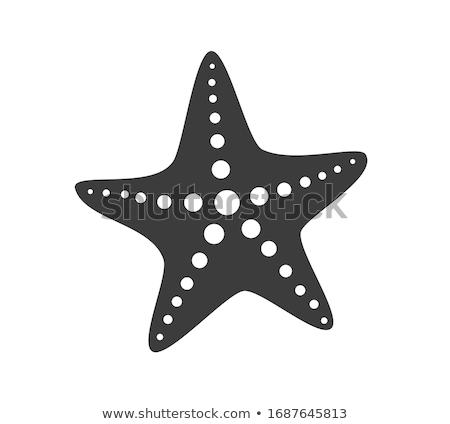Foto stock: Vetor · ícone · starfish · mar