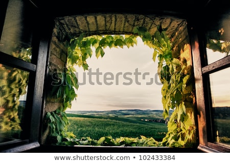 Window with view of the Tuscan Stock photo © macsim