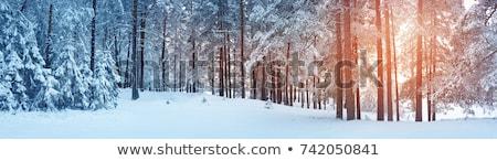 pin · arbres · soleil · brillant · bleu · star - photo stock © lunamarina
