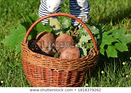 basket with real wild mushrooms Stock photo © vavlt