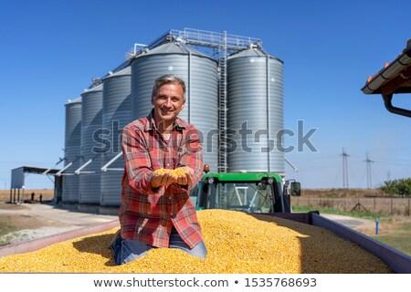 トラクター フル 穀物 フィールド 収穫 時間 ストックフォト © sarahdoow