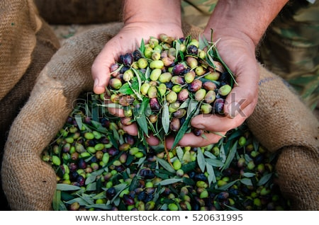 Taze zeytin yaz piknik yeşil siyah Stok fotoğraf © RAM
