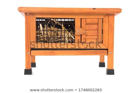 Nyulak fából készült nyúl farm nyuszi mezőgazdaság Stock fotó © bayberry