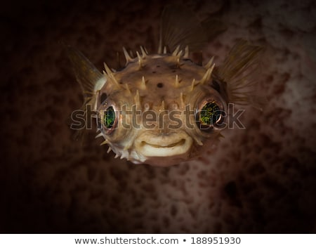 green smiling fish stock photo © derocz