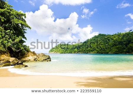 ストックフォト: ツリー · 風景 · 海 · 夏 · 手のひら · ヤシの木