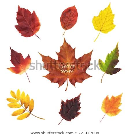 textured autumn leaves, vector Stock photo © beaubelle