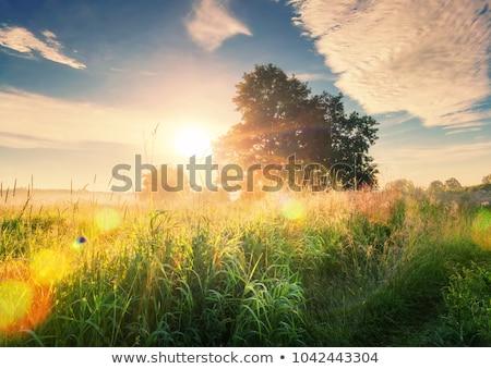Yaz sabah bitkiler kapalı çiy yeşil Stok fotoğraf © Andriy-Solovyov