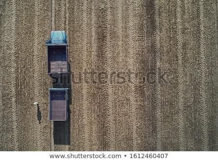 収穫 わら 太陽 日没 風景 夏 ストックフォト © alex_grichenko
