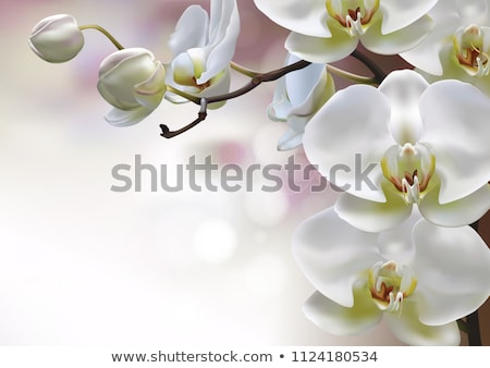 Pink white yellow Orchid flower stock photo © stocker