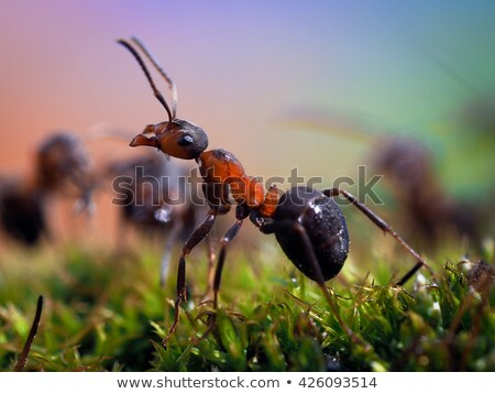 Stock photo: Red ant in the woods