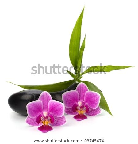 Stock foto: Shinny Pebbles Balance Spa And Healthcare Concept